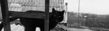 Кот Из Проволоки С Живой Головой
