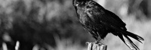 Про ворону и тещу