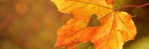 Зов Осени