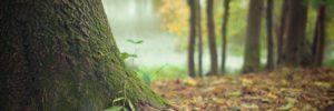 Странные игры в лесу…